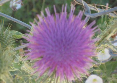 Flower on S. Josephine street in Denver, 2008